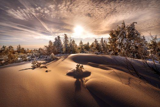 Заставки снег, ель, деревья
