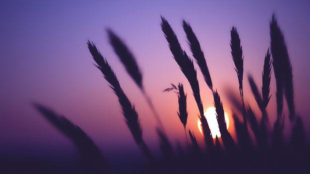 Фото бесплатно планета, закат, небо