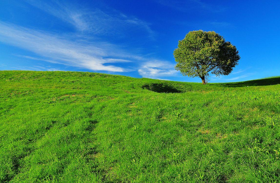 Фото бесплатно пейзаж, дерево, горы - на рабочий стол