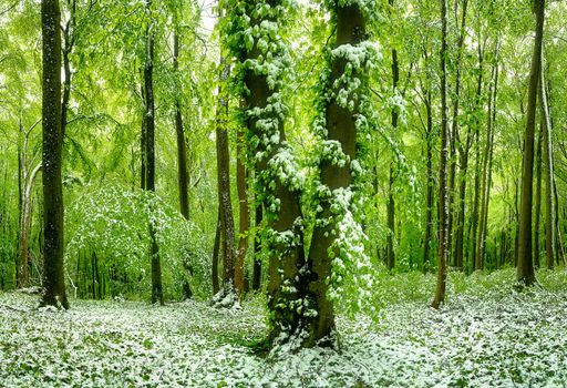 Заставки лес, деревья, снег