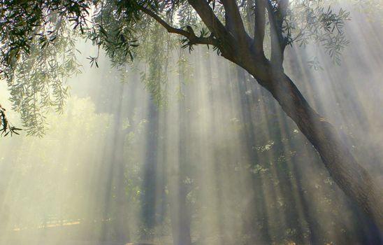 Фото бесплатно среда обитания, идиллический, лист