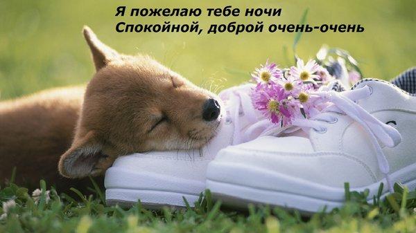Postcard free night, good spring night, good night