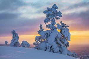 Фото бесплатно закат, деревья, Финляндия