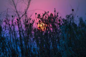 Grass and sun · free photo