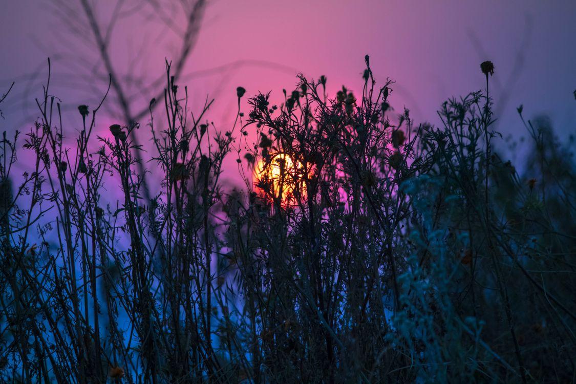 Трава и солнце · бесплатное фото