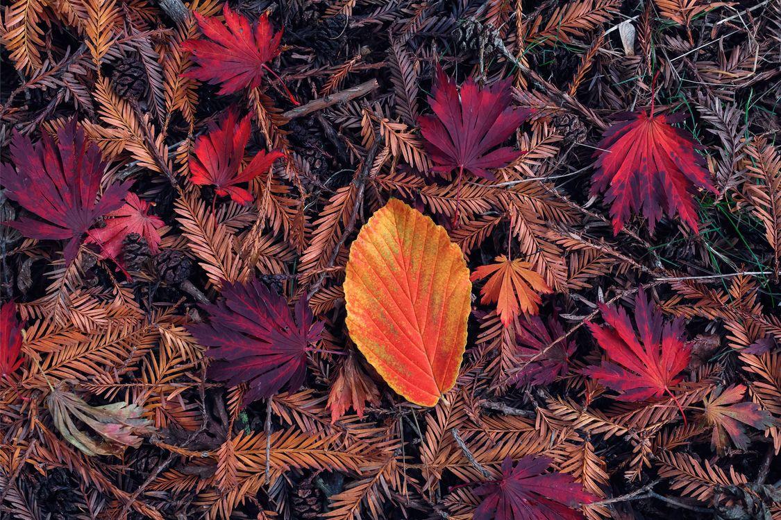 Фото бесплатно осенние листья, ветки, иголки - на рабочий стол