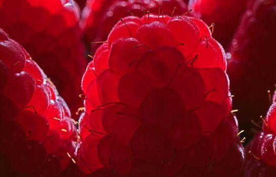 Фото бесплатно малиновый, ягоды, макро