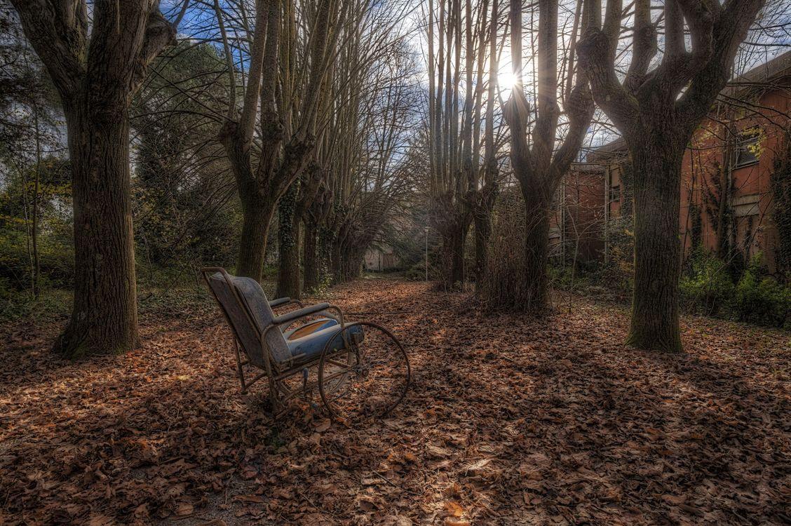 Фото бесплатно деревья, осень, дом, стул, природа