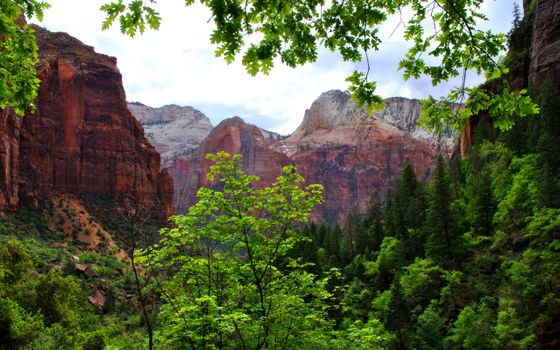 Фото бесплатно камни, ветки, горы