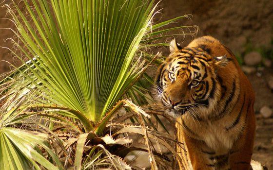 Photo free nature, grass, tiger