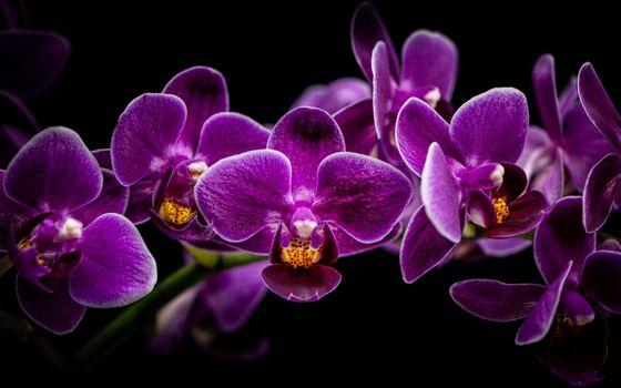 Заставки орхидея, цветок, чёрный фон