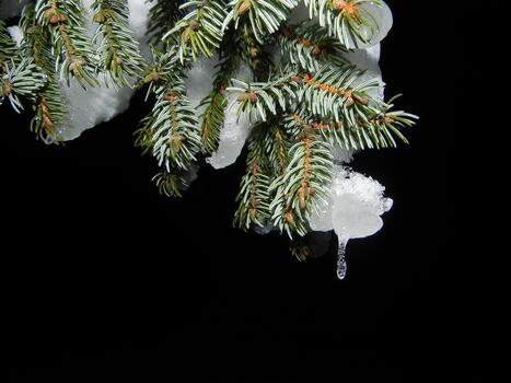Фото бесплатно ветвь, снег, ботаника