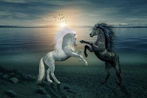 Белая лошадь конь и чёрный на закате