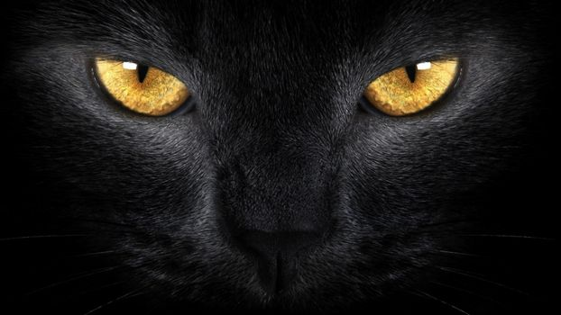 Фото бесплатно кошка, черный, близко