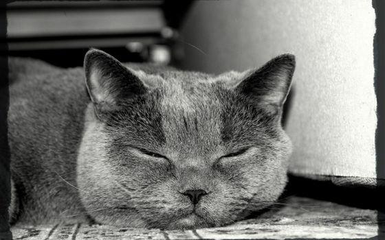 Фото бесплатно кот, ленивый, лежа