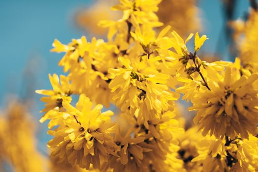 Photo free flowers, yellow, branches