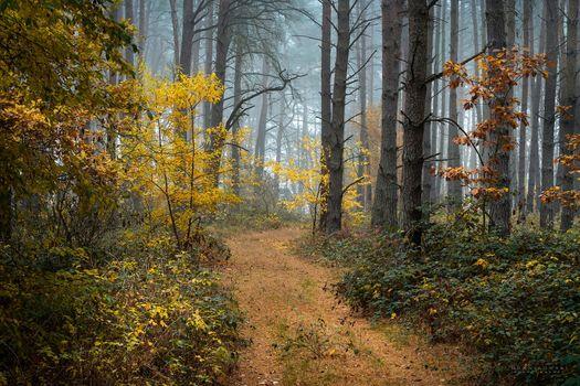Beautiful fall wallpaper, autumn season, the road to the phone