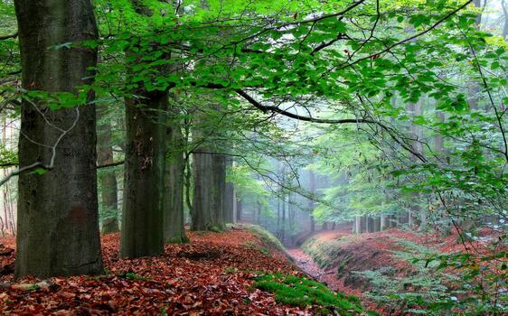 Фото бесплатно туман, окружающая природа, экосистема