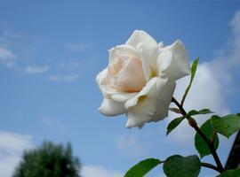 Фото бесплатно белый, природа, небо