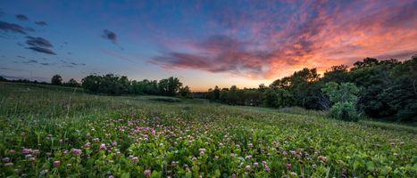 Бесплатные фото закат,солнца,поле,цветы,клевер,деревья,пейзаж