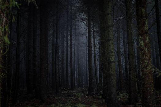 Фото бесплатно темный лес, туман, страшно