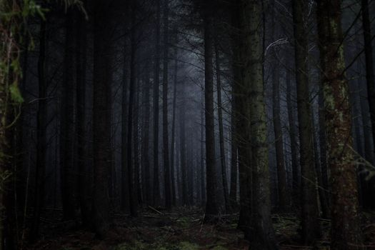 Заставки темный лес, туман, страшно