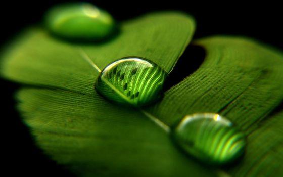 Фото бесплатно капли воды, зеленый фон, макро
