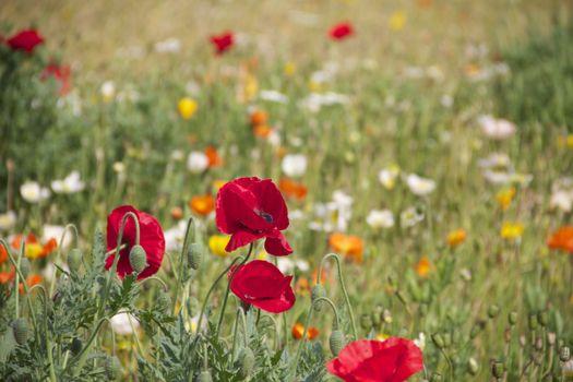 Photo free landscape, grass, flower