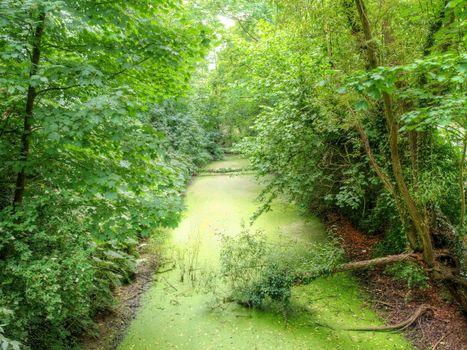 Бесплатные фото лес,деревья,водоём,пруд,природа