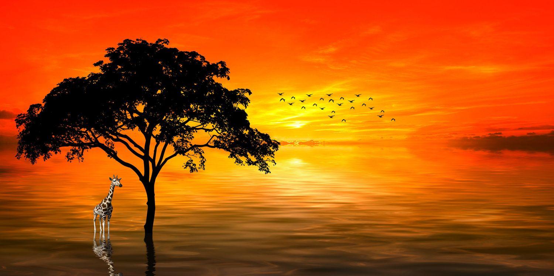Фото бесплатно море, дерево, жираф - на рабочий стол
