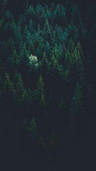 Бесплатные фото деревья,вид сверху,лес,темнота,trees,top view,forest,dark