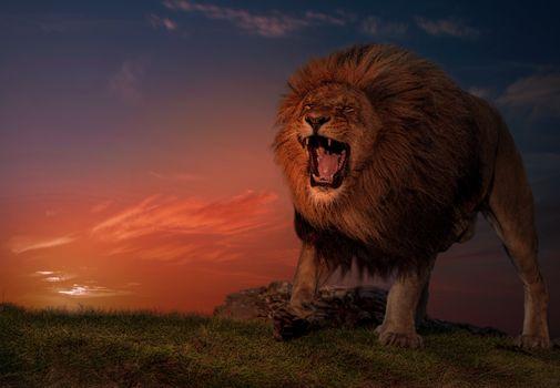 Фото бесплатно закат, поле, лев