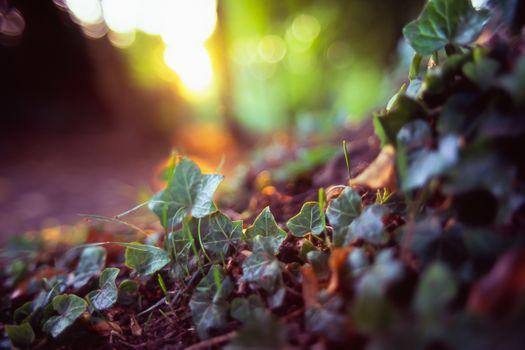 Заставки листья, растения, солнечный свет