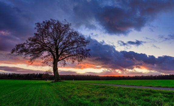 Photo free field, road, single tree