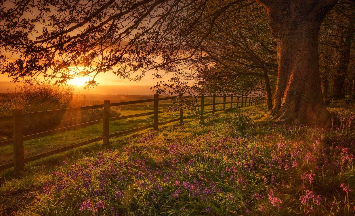 Обои закат, поле, цветы, забор, деревья, пейзаж на телефон | картинки пейзажи
