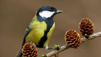 Фото бесплатно дикая природа, позвоночные, фауны