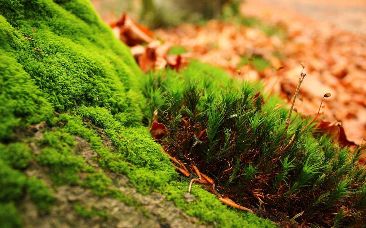 Обои мох, растения, размытые картинки на телефон