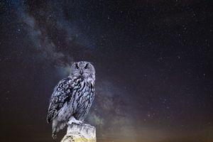 Фото бесплатно сова, звездное небо, фотошоп