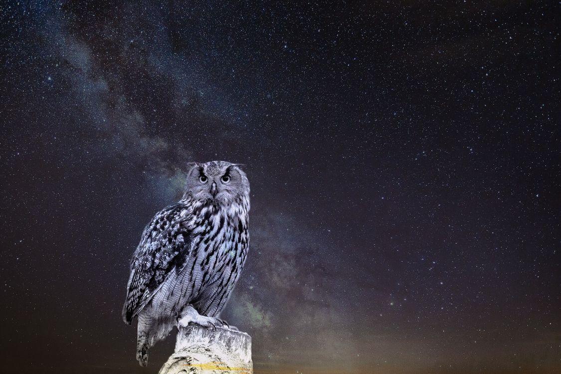 Фото бесплатно сова, звездное небо, фотошоп, owl, starry sky, photoshop, птицы - скачать на рабочий стол