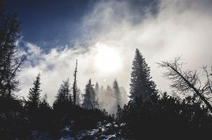 Фото бесплатно зима, утро, сумрак
