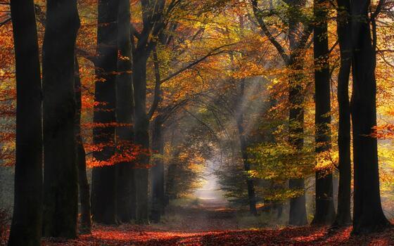 Фото бесплатно солнечный свет, Нидерланды, солнечные лучи
