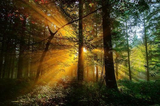 Фото бесплатно солнечные лучи, деревья, природа