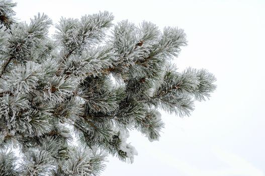 Фото бесплатно зима, древесное растение, бесплатные изображения
