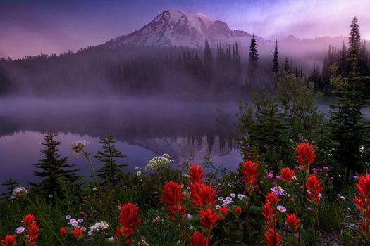 Фото бесплатно Mount Rainier National Park, закат, озеро