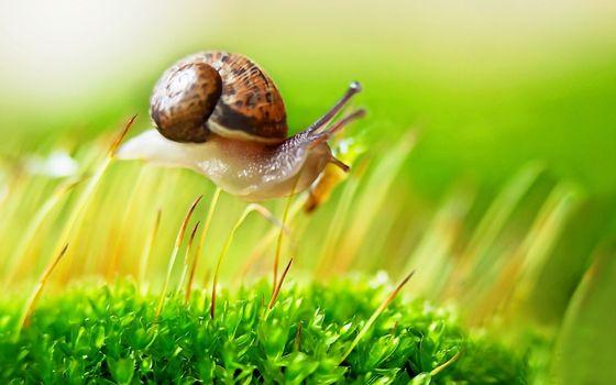 Photo free snail, grass, shell
