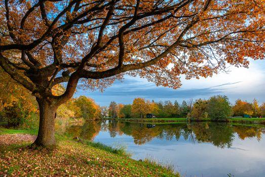 Photo free lake, autumn leaves, colors of autumn