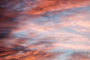 Фото бесплатно птица, небо, облака