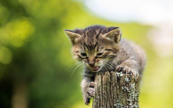 Фото бесплатно котенок, напугал, дерево