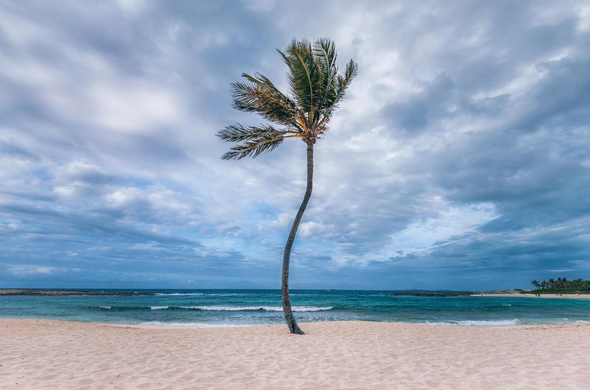 Обои море, берег, пляж, пальма