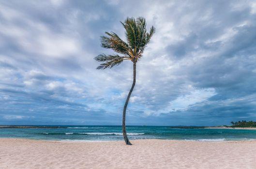 Photo free palm, sea, beach